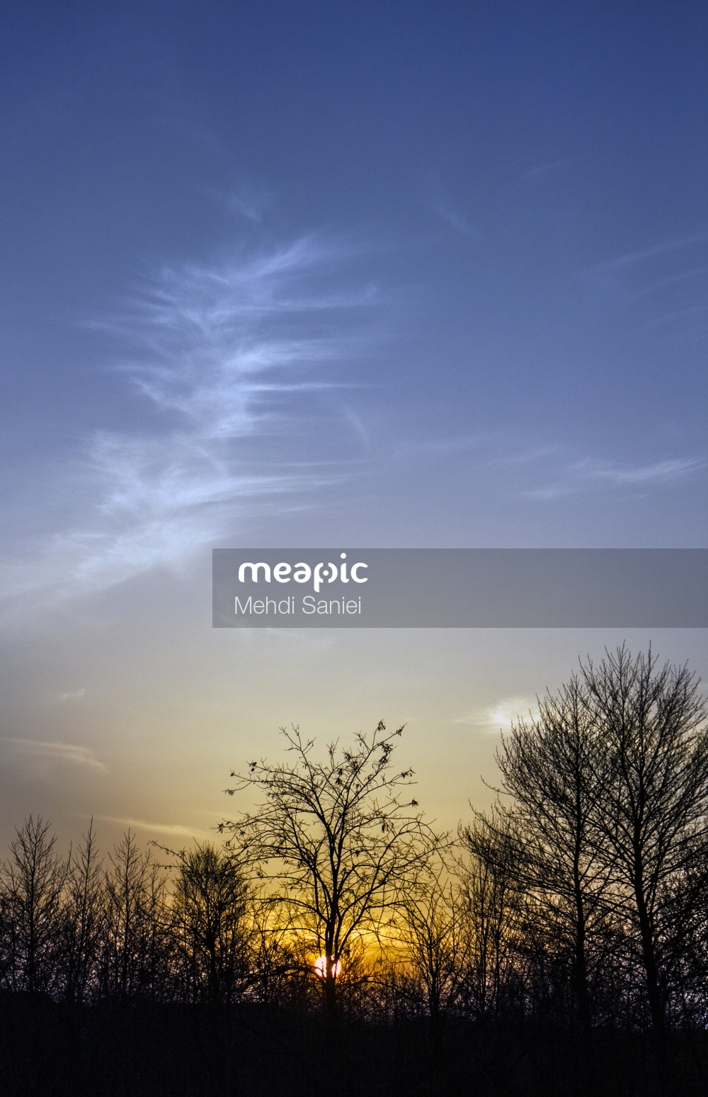 Tree In The Sky Stock Photo · Meapic