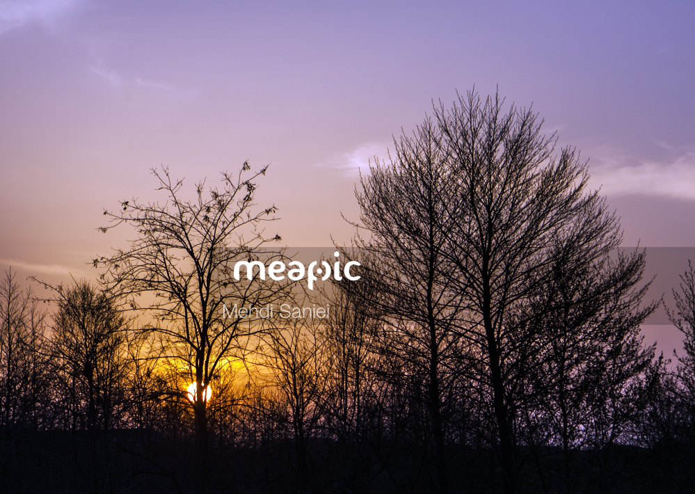 Large Tree In A Forest Stock Photo · Meapic