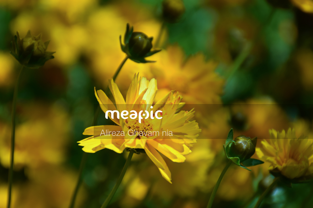 Vase Of Flowers On A Plant Stock Photo · Meapic