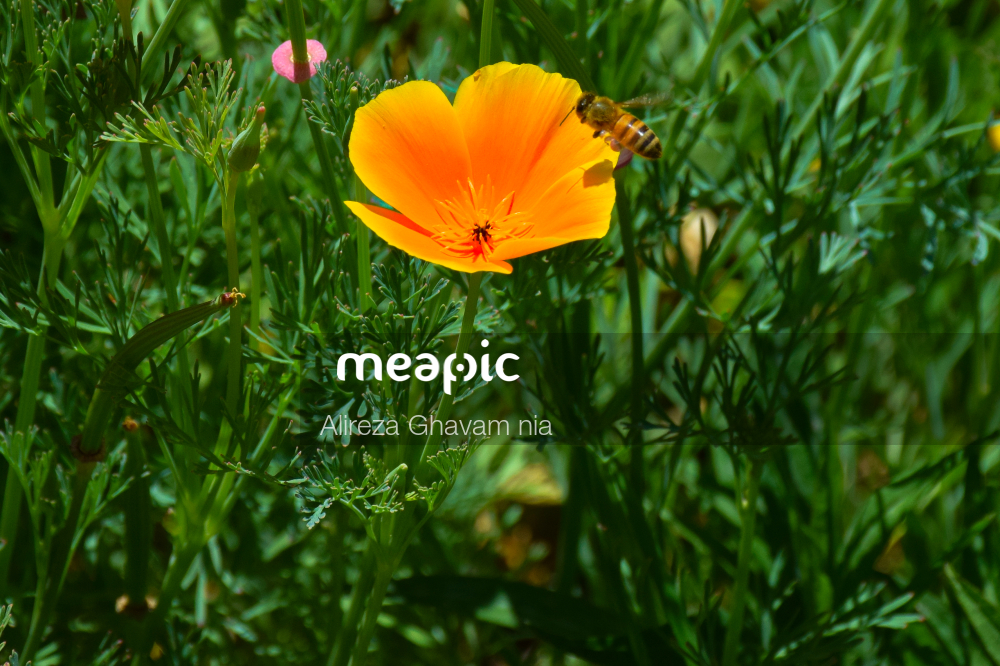 Yellow Flower In The Grass Stock Photo · Meapic