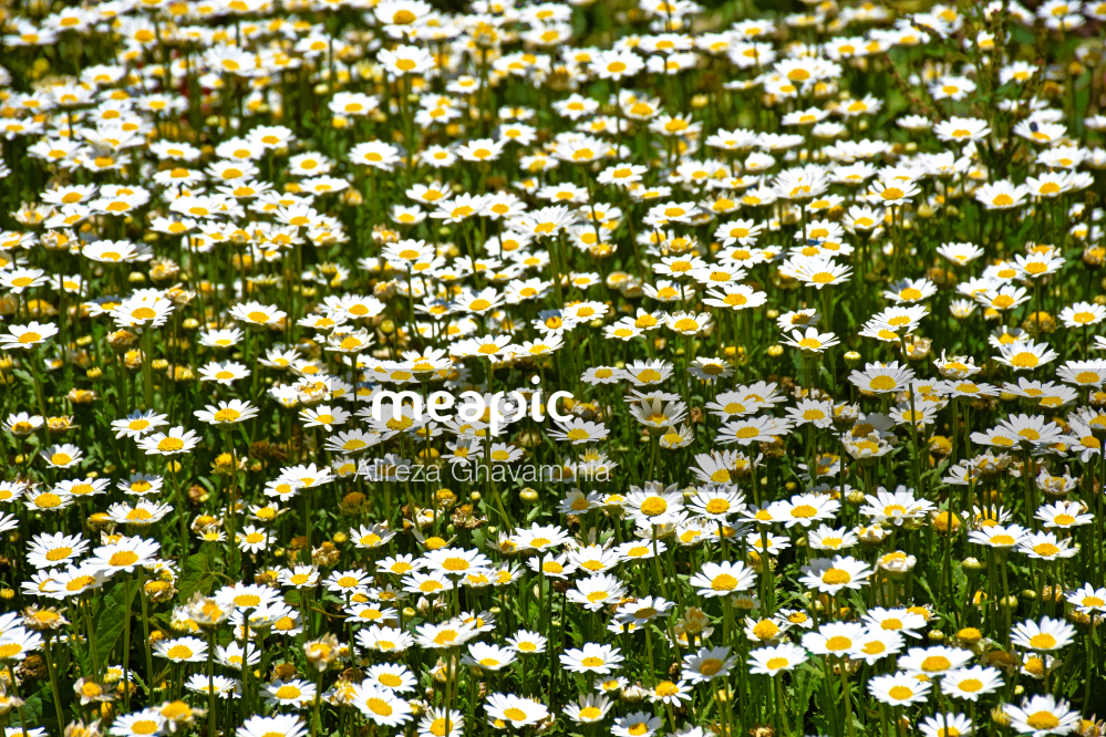 Close Up Of A Flower Stock Photo · Meapic
