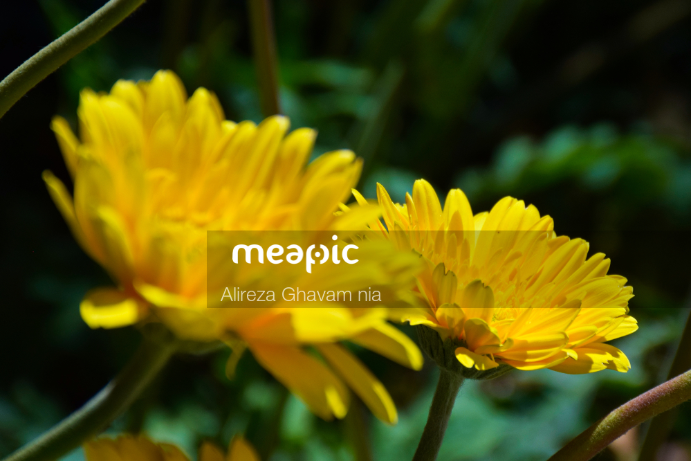 Yellow Flower Stock Photo · Meapic
