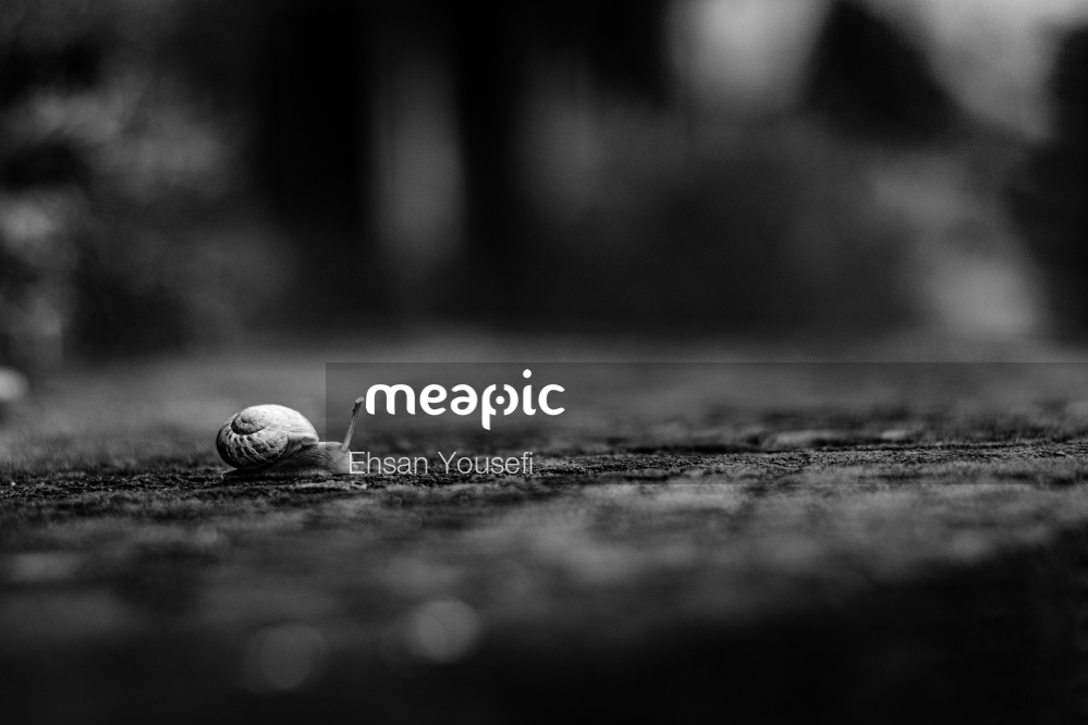 Snail On The Ground Stock Photo · Meapic