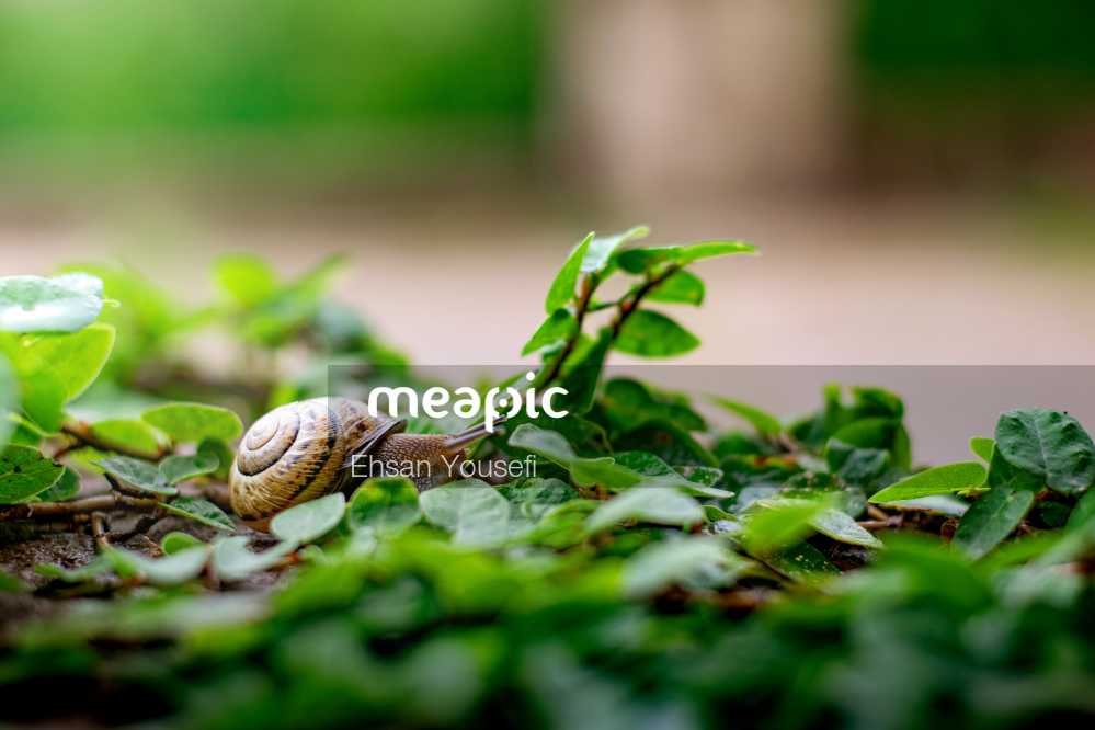 Turtle In The Grass Stock Photo · Meapic