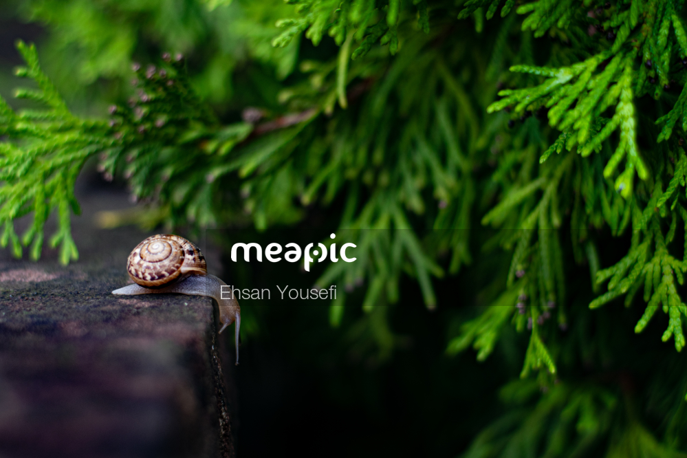 Snail Sitting On The Ground Stock Photo · Meapic