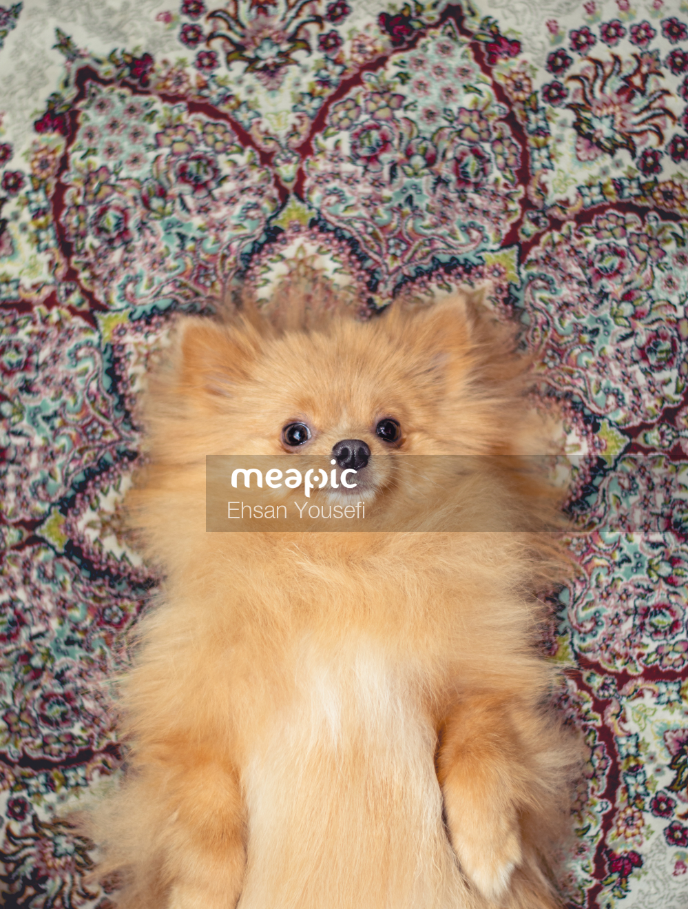 Brown And White Dog Stock Photo · Meapic