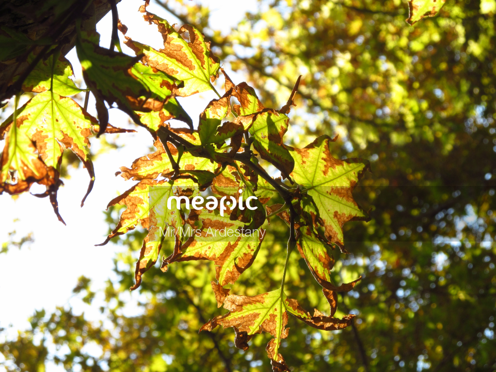 Close Up Of A Tree Stock Photo · Meapic
