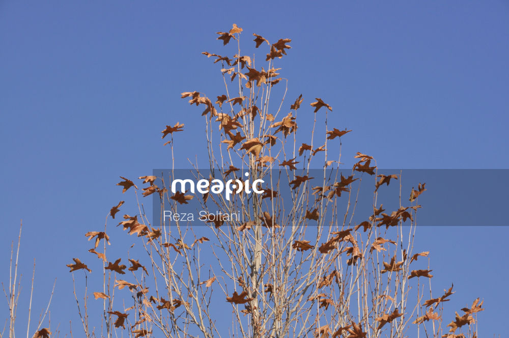 Flock Of Birds Flying Over A Tree Stock Photo · Meapic