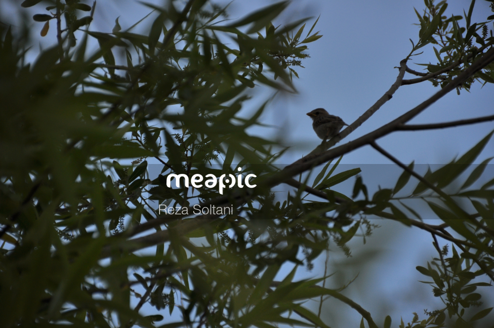 Bird Perched On A Tree Branch Stock Photo · Meapic