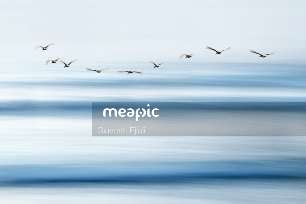 Flock Of Seagulls Flying Over A Body Of Water Stock Photo · Meapic