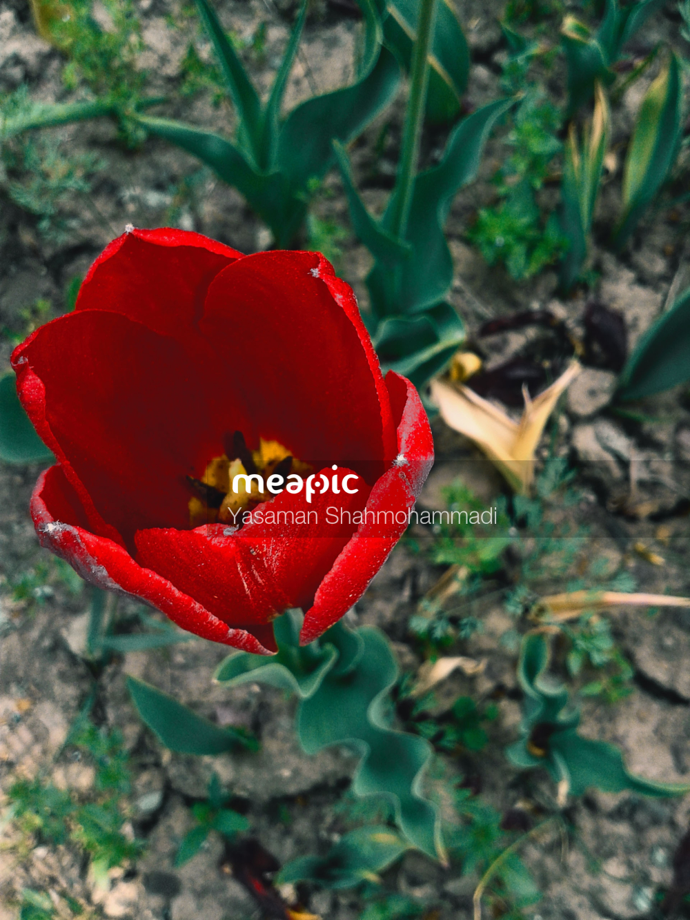 Red Flower With Green Leaves Stock Photo · Meapic