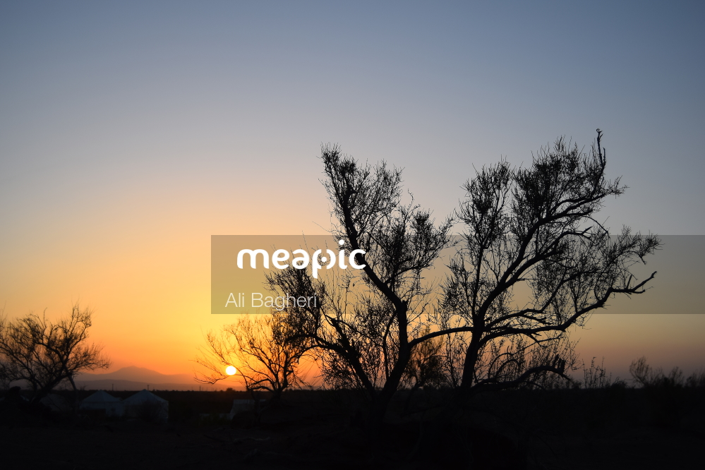 Tree With A Sunset In The Background Stock Photo · Meapic