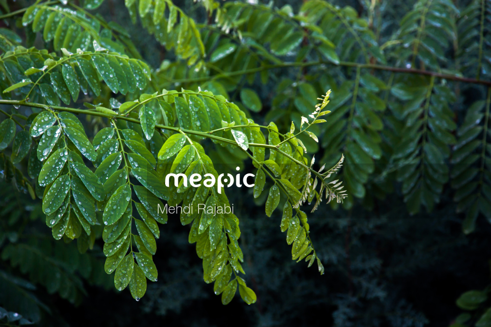 Green Plant Stock Photo · Meapic