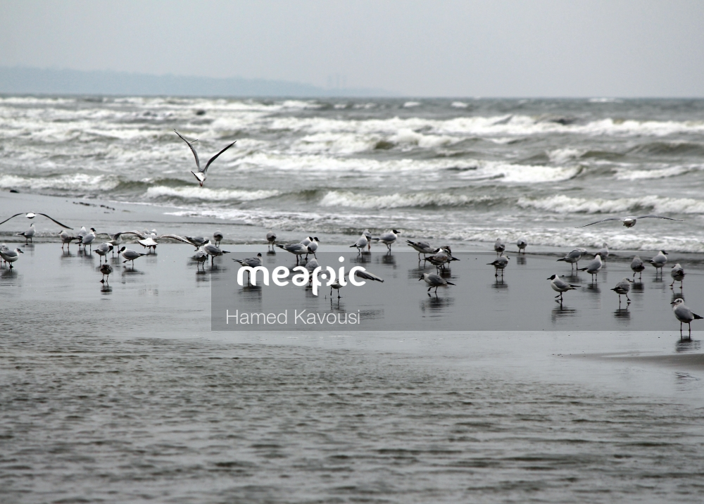 Flock Of Seagulls Standing On A Sandy Beach Next To The Ocean Stock Photo · Meapic