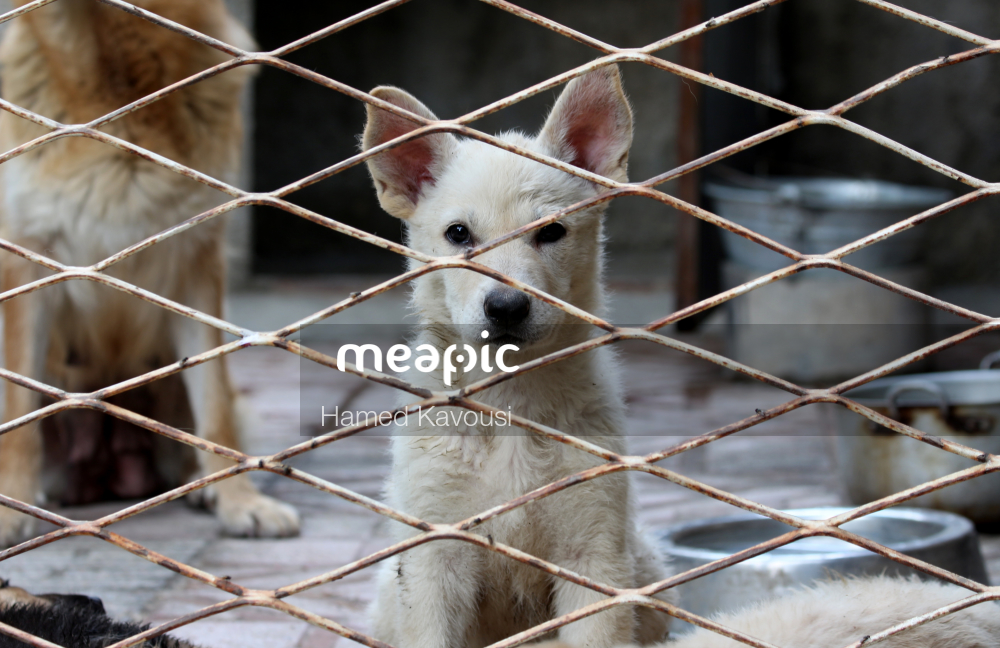 Dog Standing Next To A Wire Fence Stock Photo · Meapic