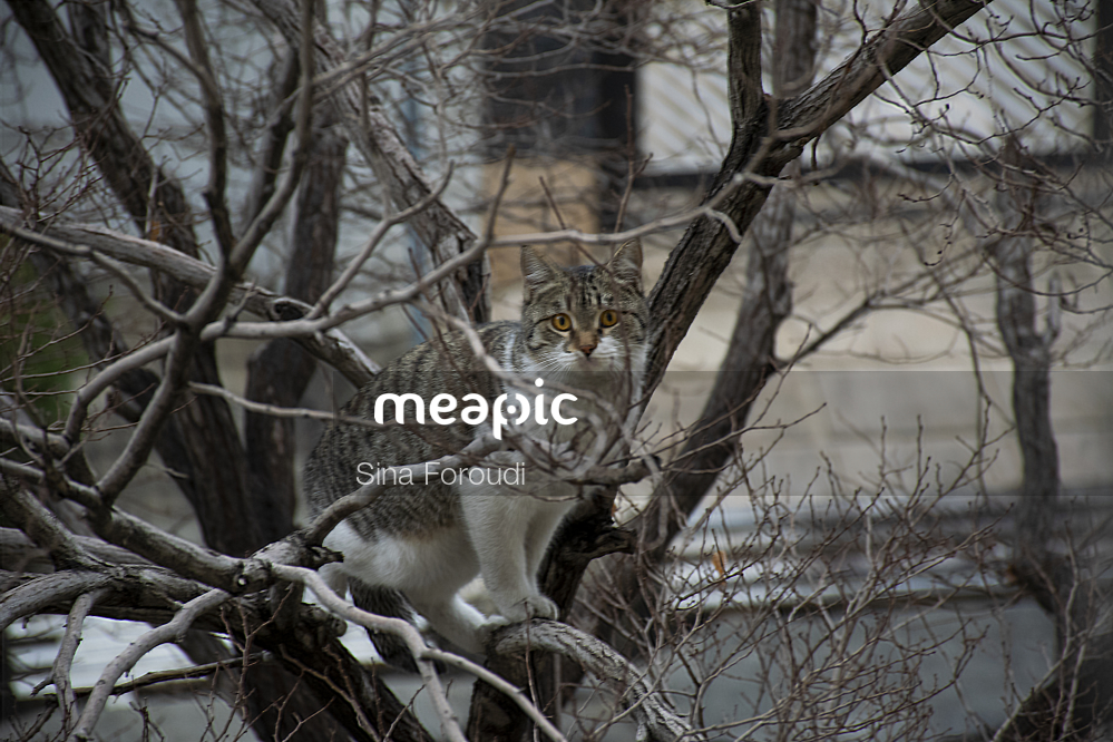 Cat Sitting On The Branch Of A Tree Stock Photo · Meapic