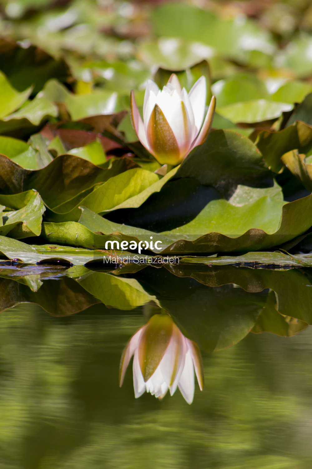Close Up Of A Pond Stock Photo · Meapic