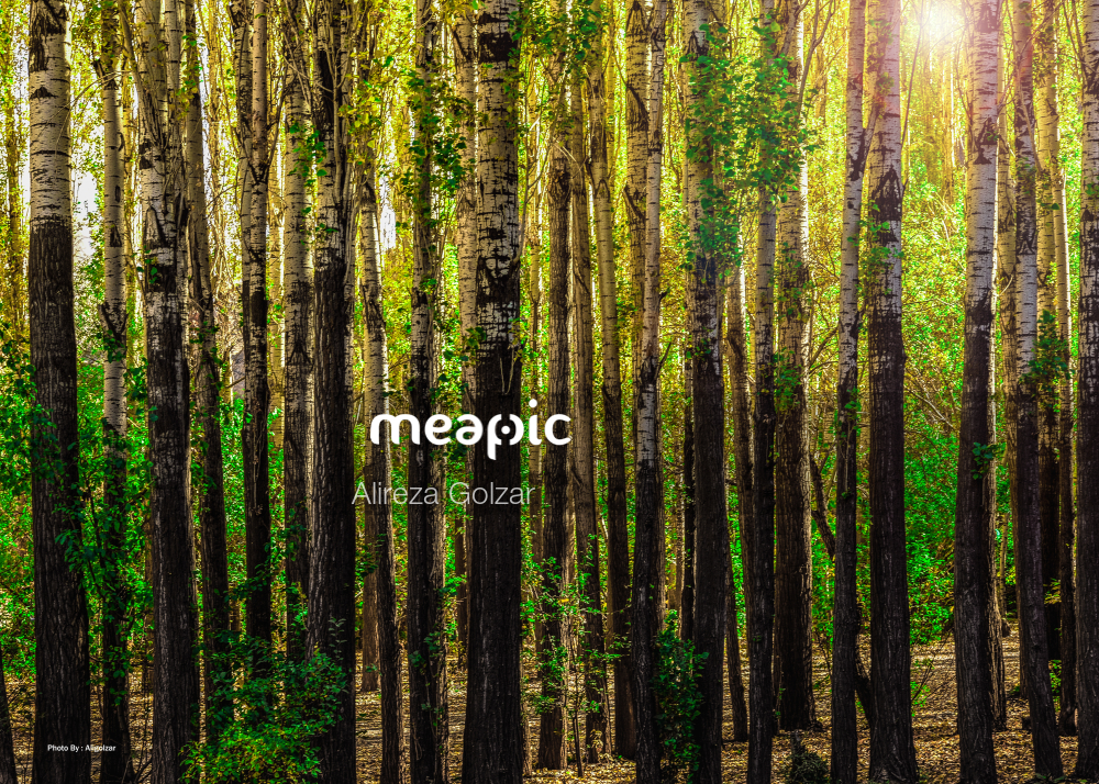 Tree In A Forest Stock Photo · Meapic