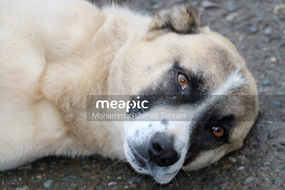 Dog's Eyes Stock Photo · Meapic