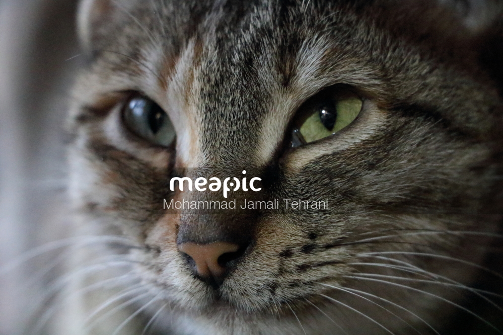 Cat's Eye Stock Photo · Meapic