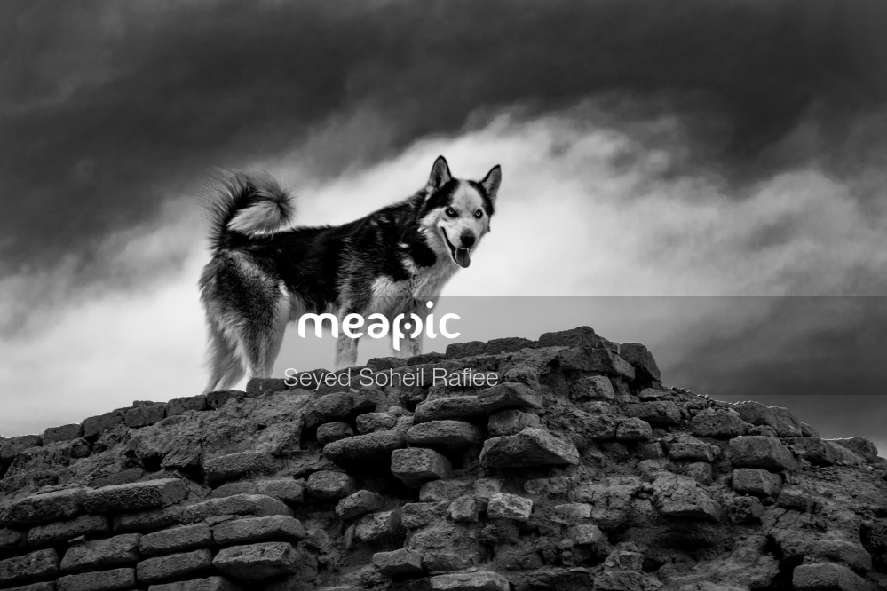Dog Standing On A Rocky Hill Stock Photo · Meapic
