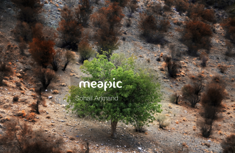 Plant In A Forest Stock Photo · Meapic