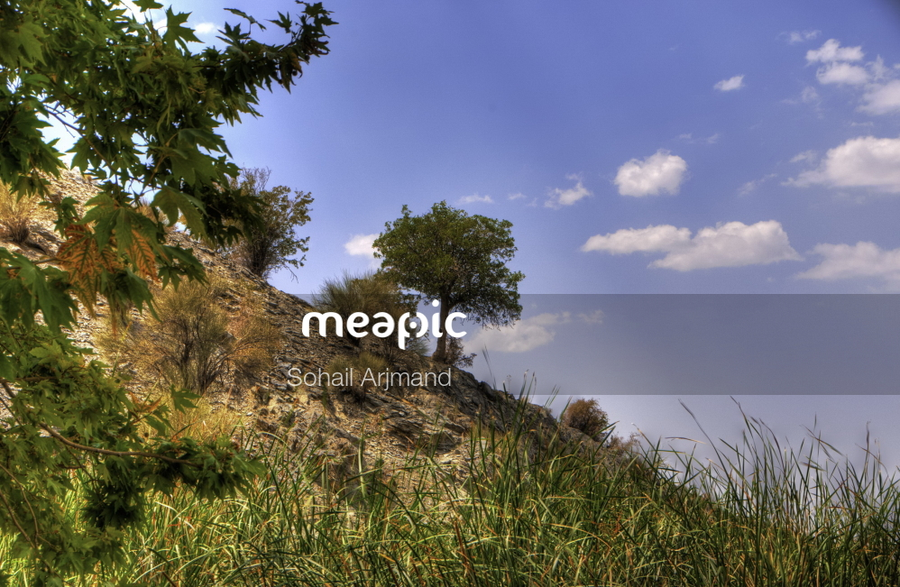 Tree On A Grassy Hill Stock Photo · Meapic