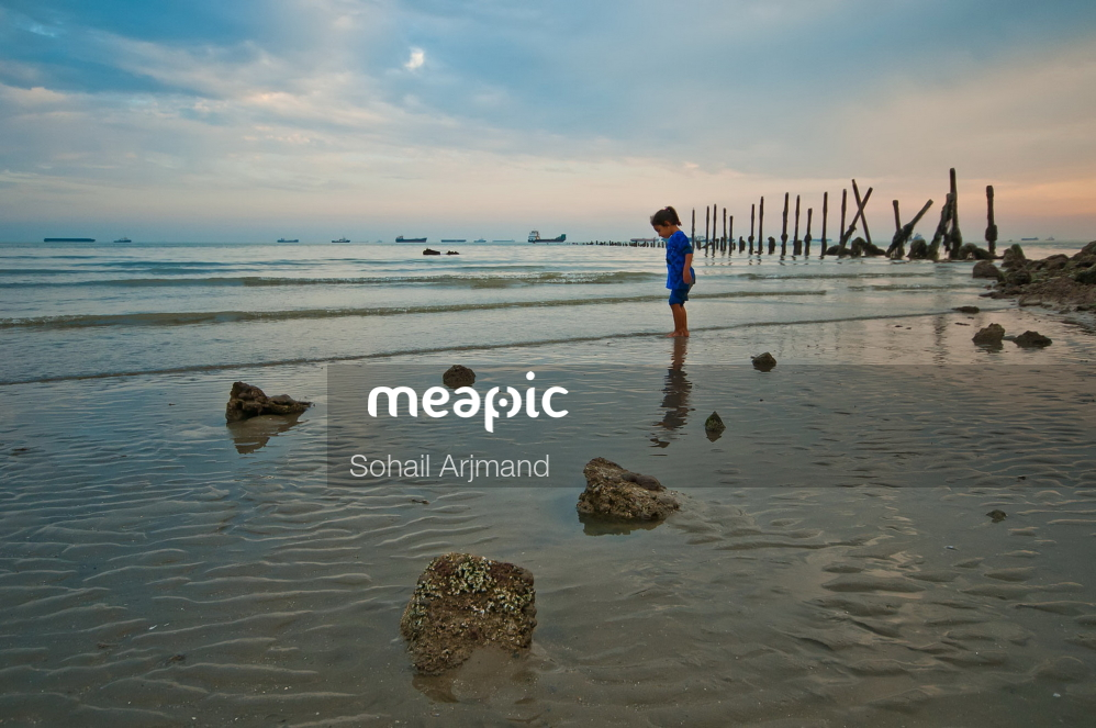 Flock Of Seagulls Standing On A Beach Near A Body Of Water Stock Photo · Meapic