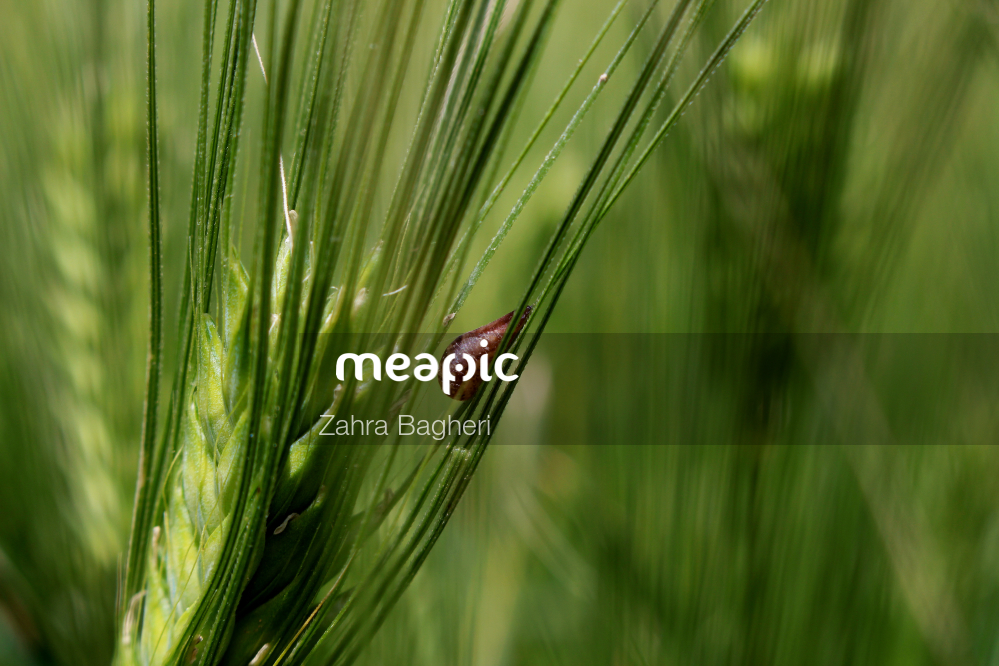 Close Up Of A Plant Stock Photo · Meapic