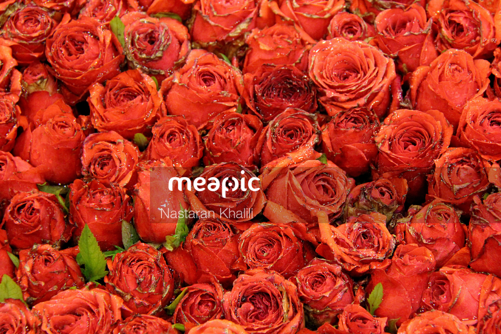 Group Of Colorful Flowers Stock Photo · Meapic