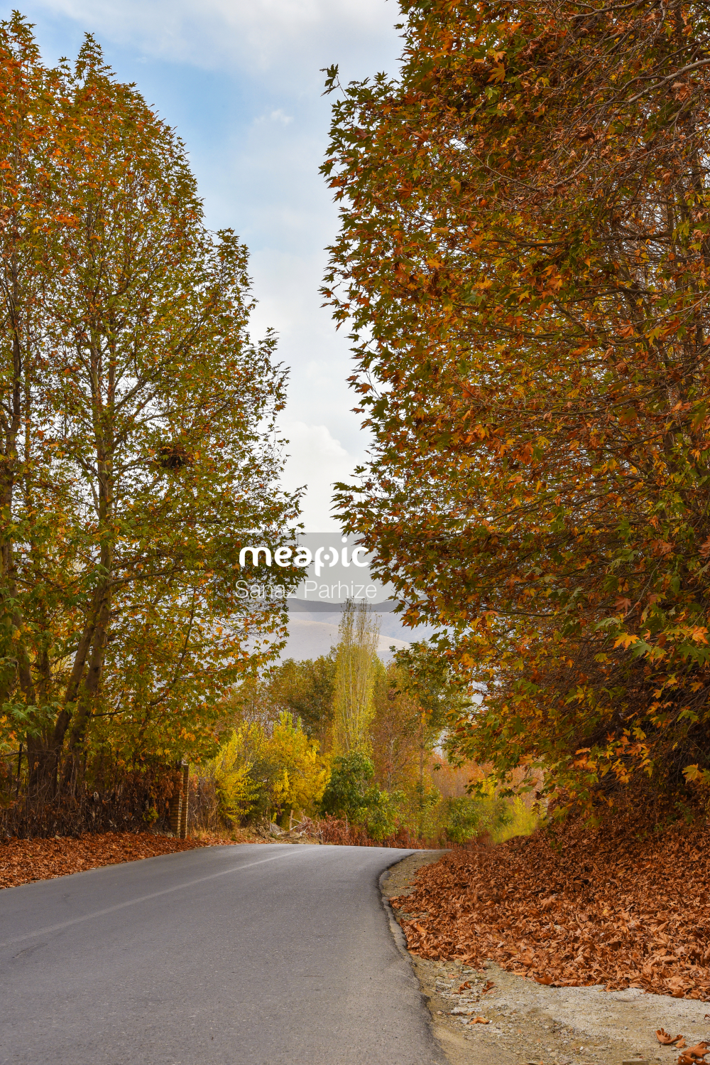 Tree In The Middle Of A Road Stock Photo · Meapic