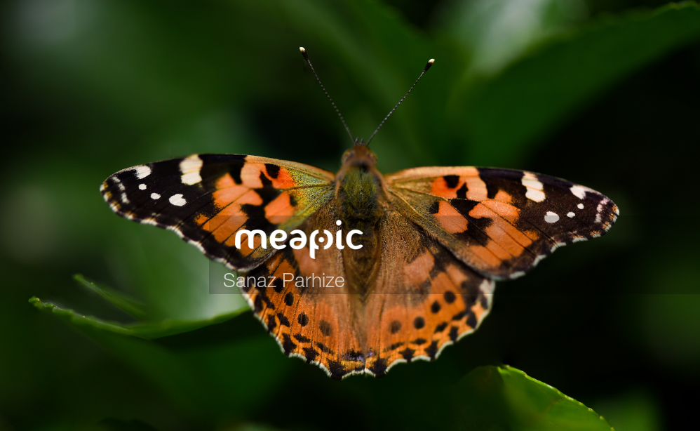 Small Insect On A Branch Stock Photo · Meapic