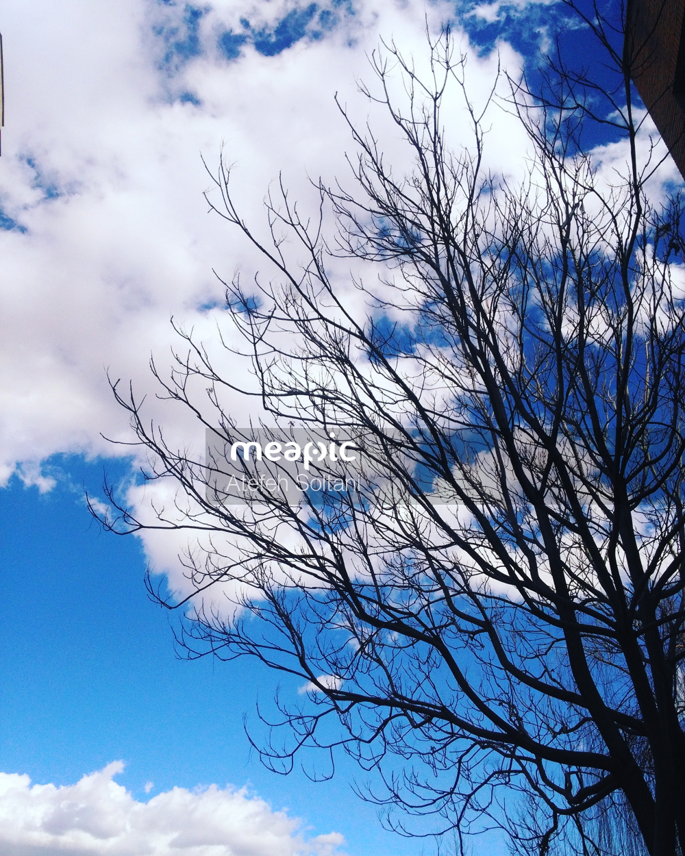 Tree In Front Of A Cloudy Blue Sky Stock Photo · Meapic