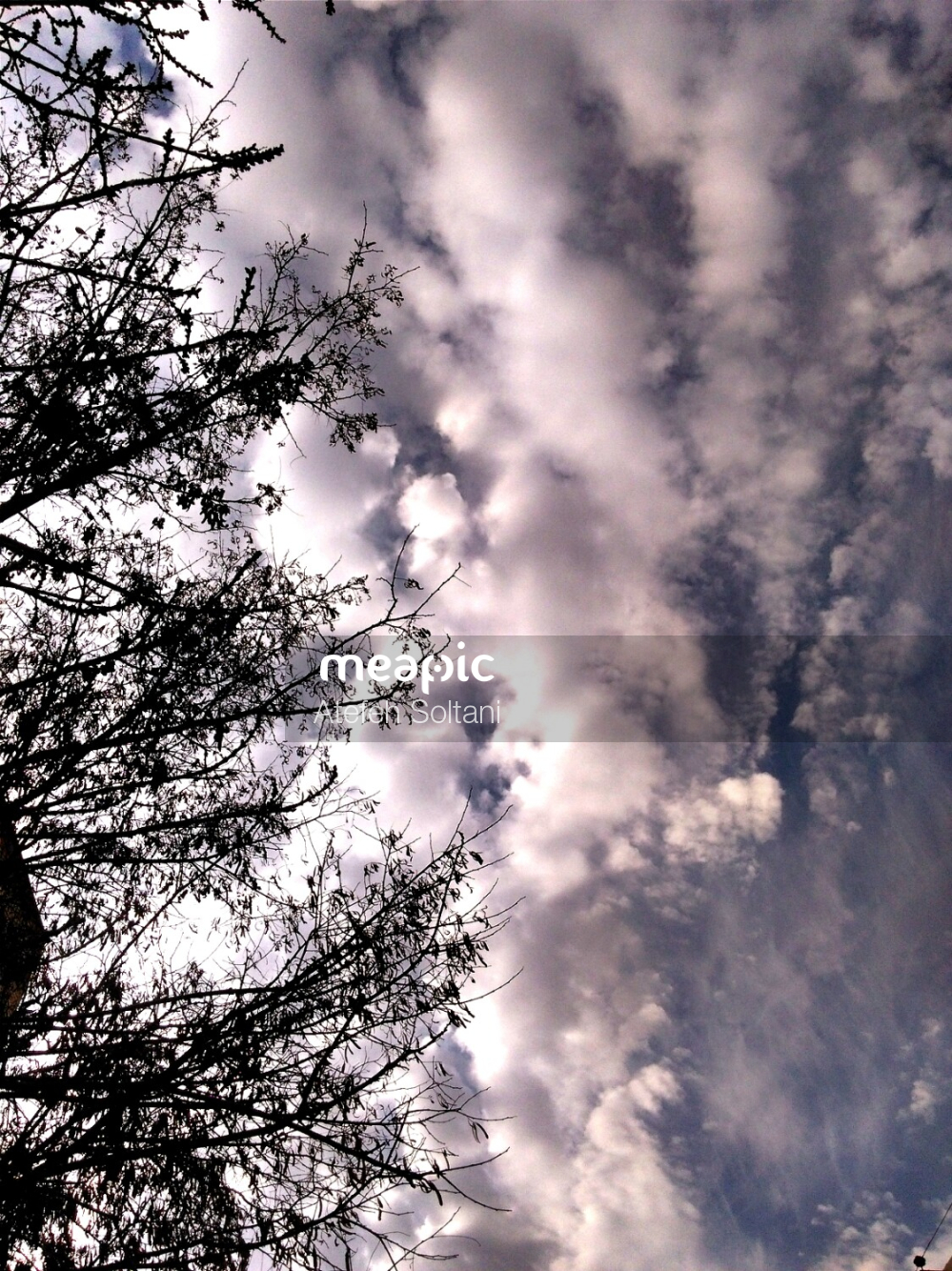 Tree With Smoke Coming Out Of It Stock Photo · Meapic