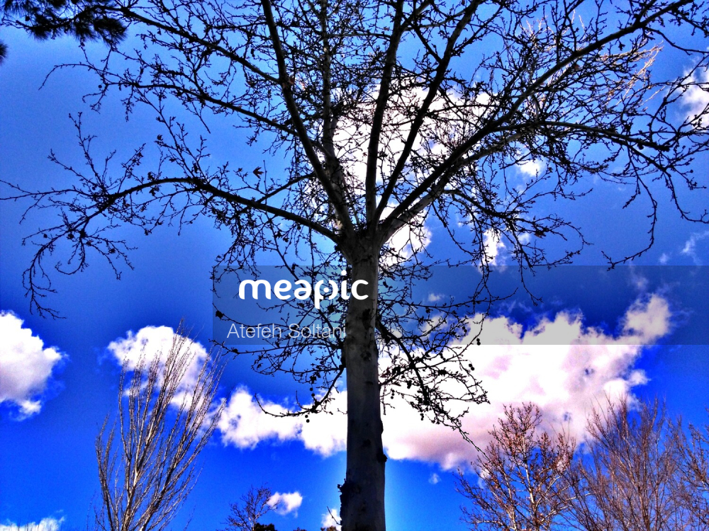 Large Tree Stock Photo · Meapic