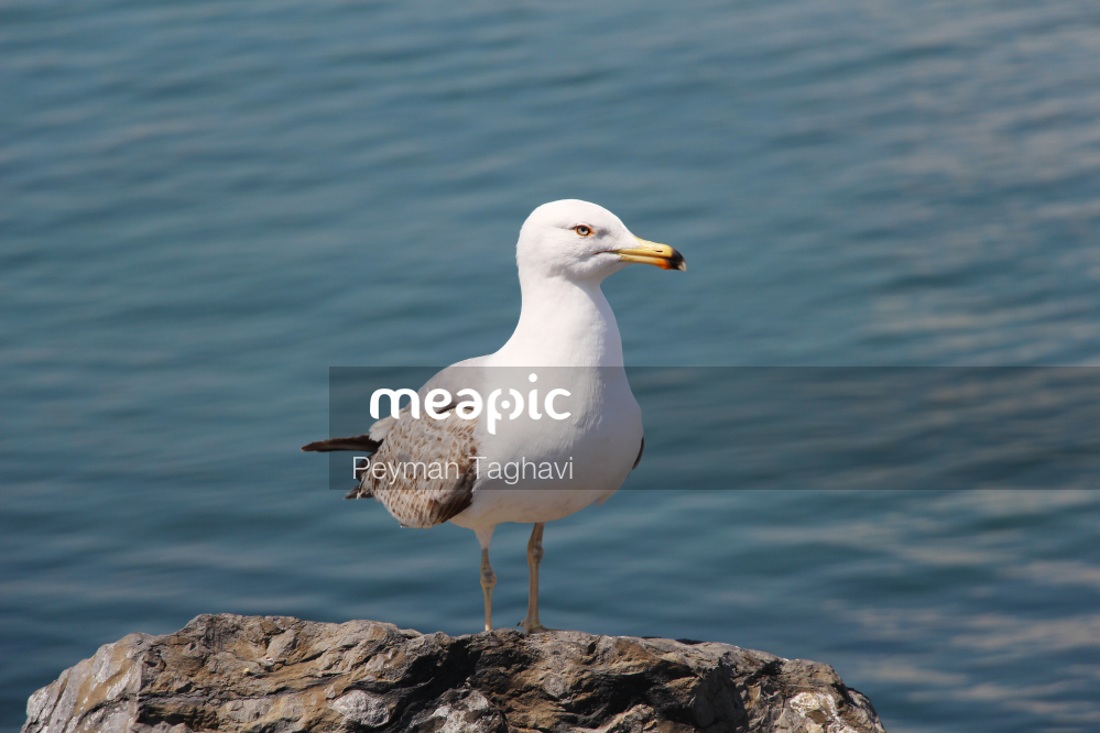 Bird Standing On A Rock Next To A Body Of Water Stock Photo · Meapic