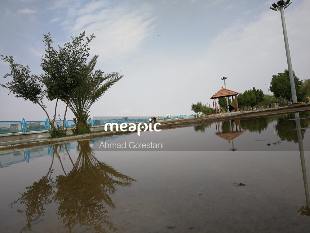Group Of Palm Trees Next To A Body Of Water Stock Photo · Meapic