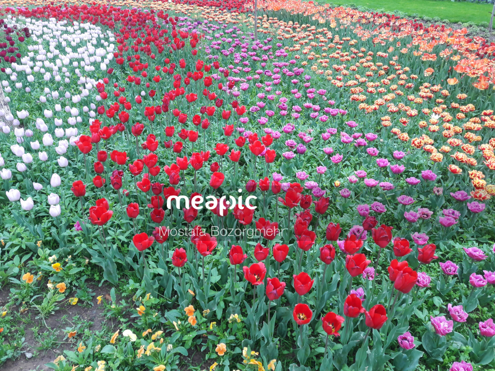 Red Flower In A Field Stock Photo · Meapic
