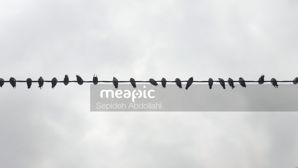 Flock Of Seagulls Perched On A Cloudy Day Stock Photo · Meapic