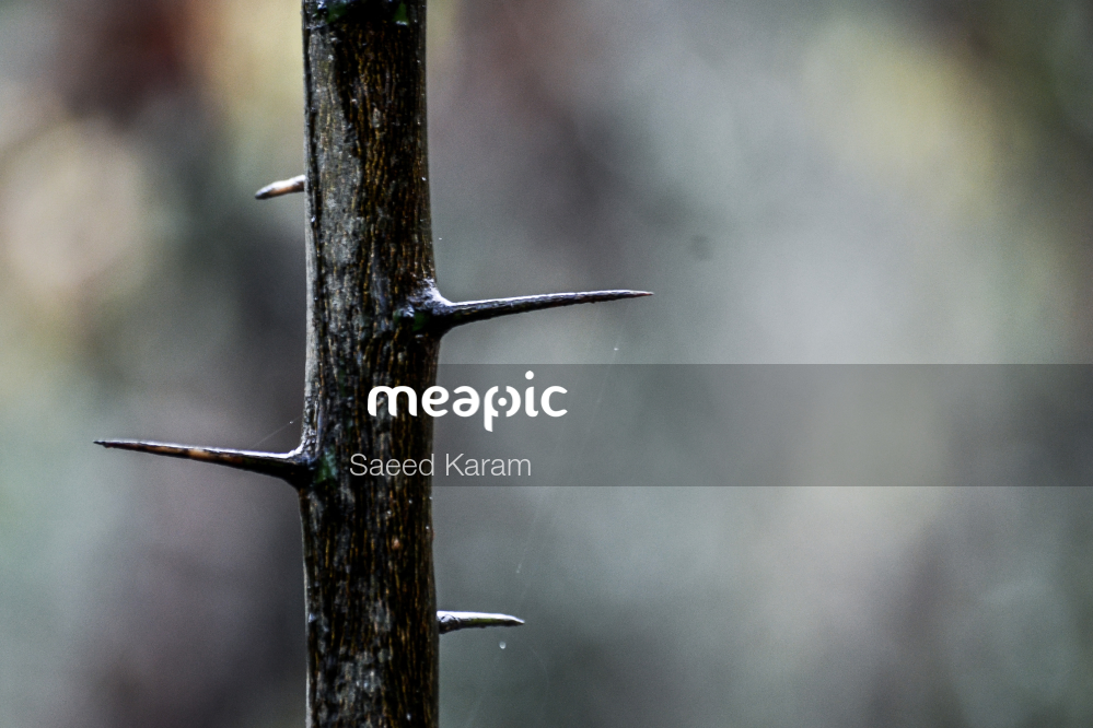 Small Bird Sitting On A Branch Stock Photo · Meapic