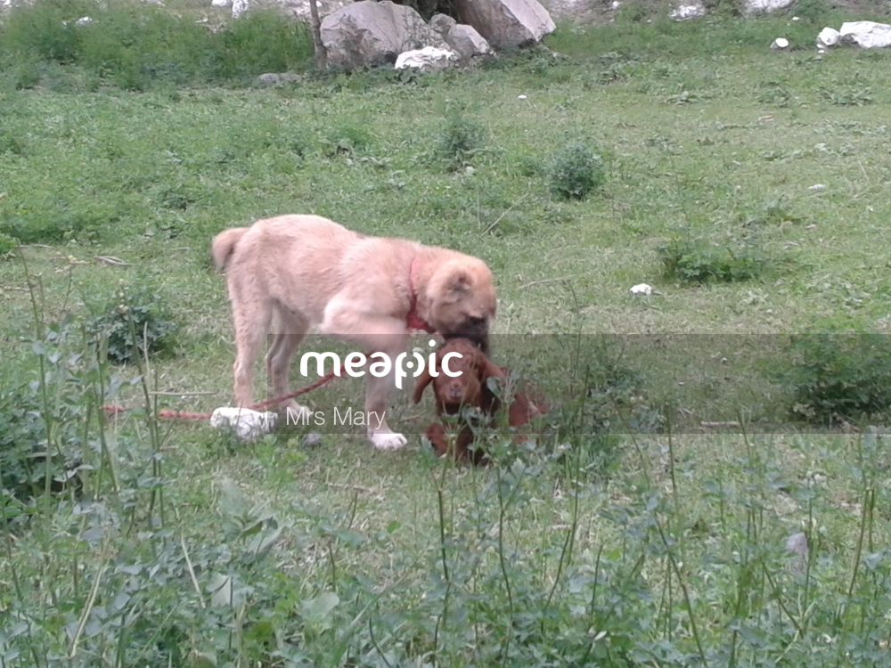 Animal On The Field Stock Photo · Meapic