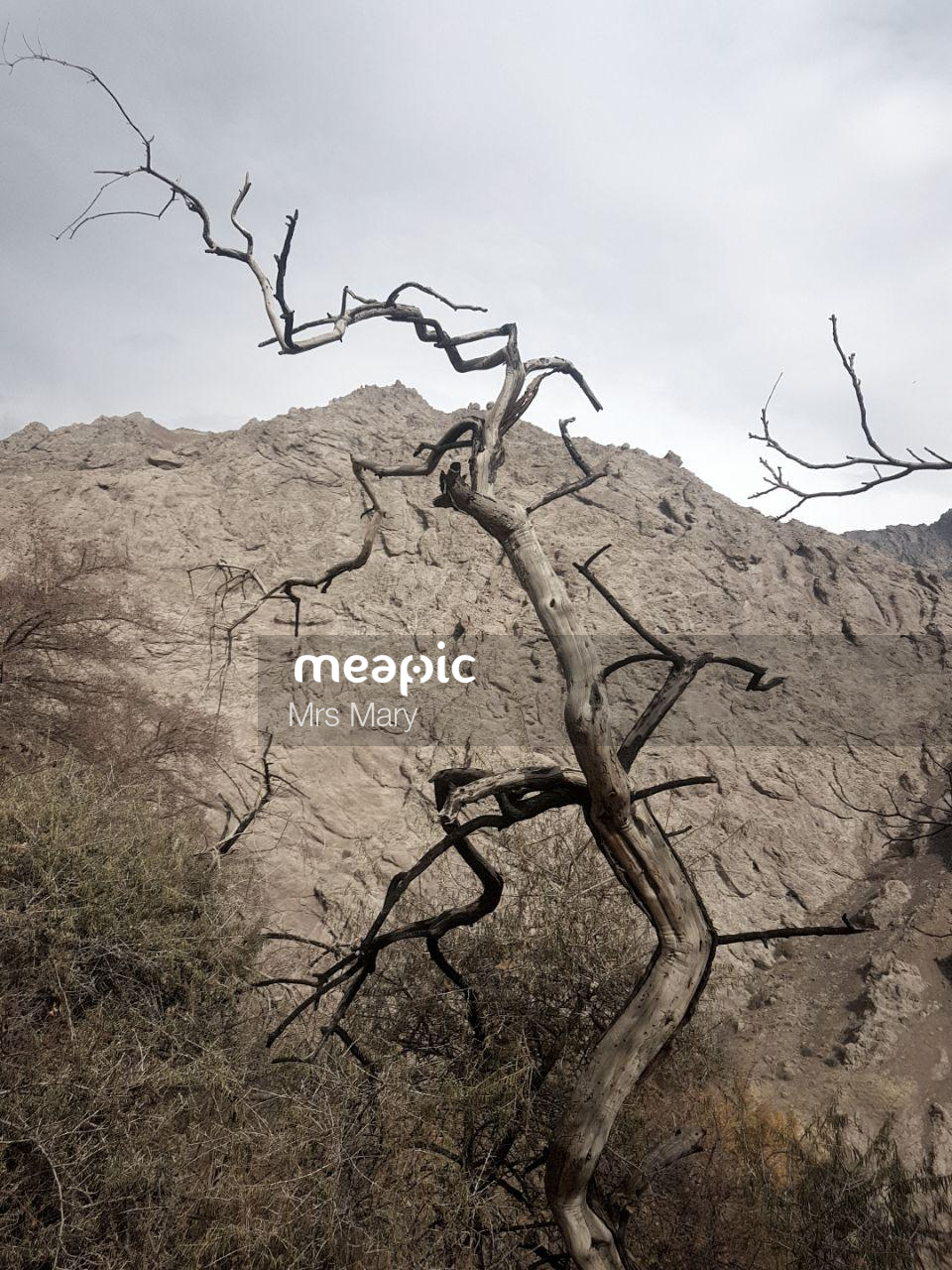 Tree With A Mountain In The Background Stock Photo · Meapic