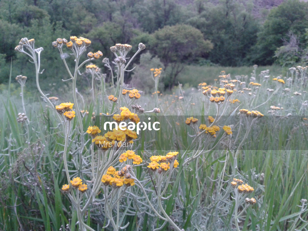 Yellow Flower In A Field Stock Photo · Meapic