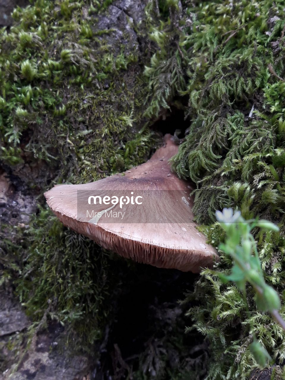 Close Up Of Some Bushes Stock Photo · Meapic