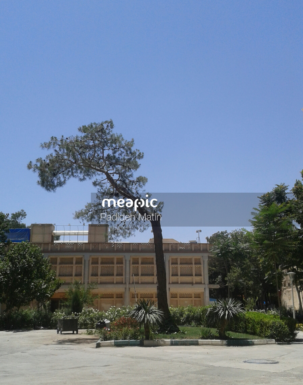 Tree In A Parking Lot Stock Photo · Meapic
