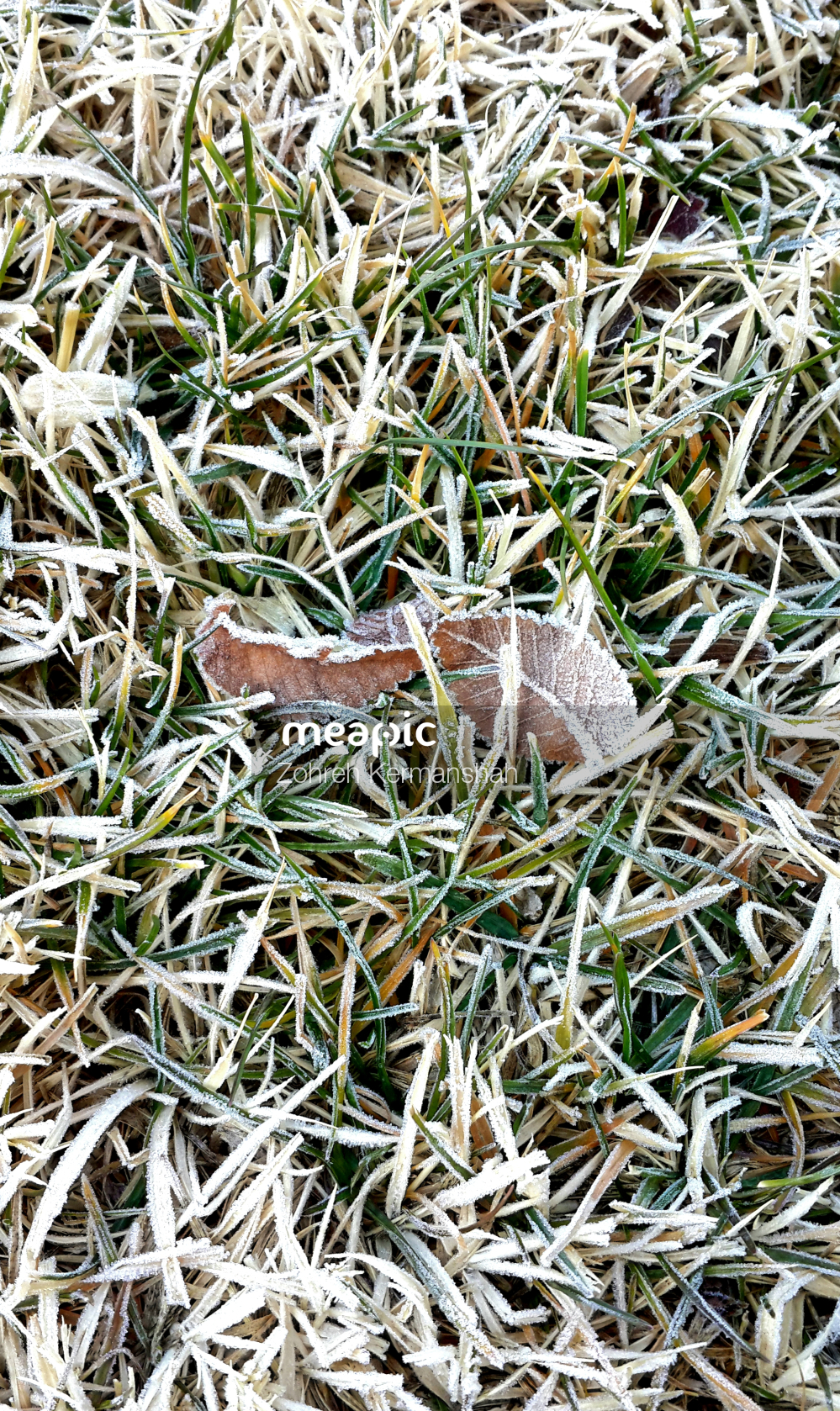 Piece Of Grass Stock Photo · Meapic