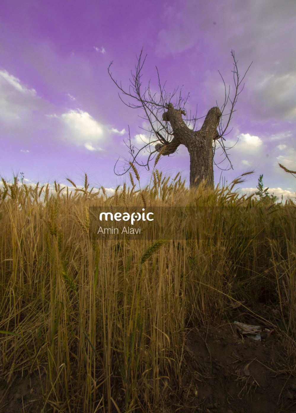 I Am Not Really Confident, But Flock Of Birds Standing On Top Of A Grass Covered Field Stock Photo · Meapic