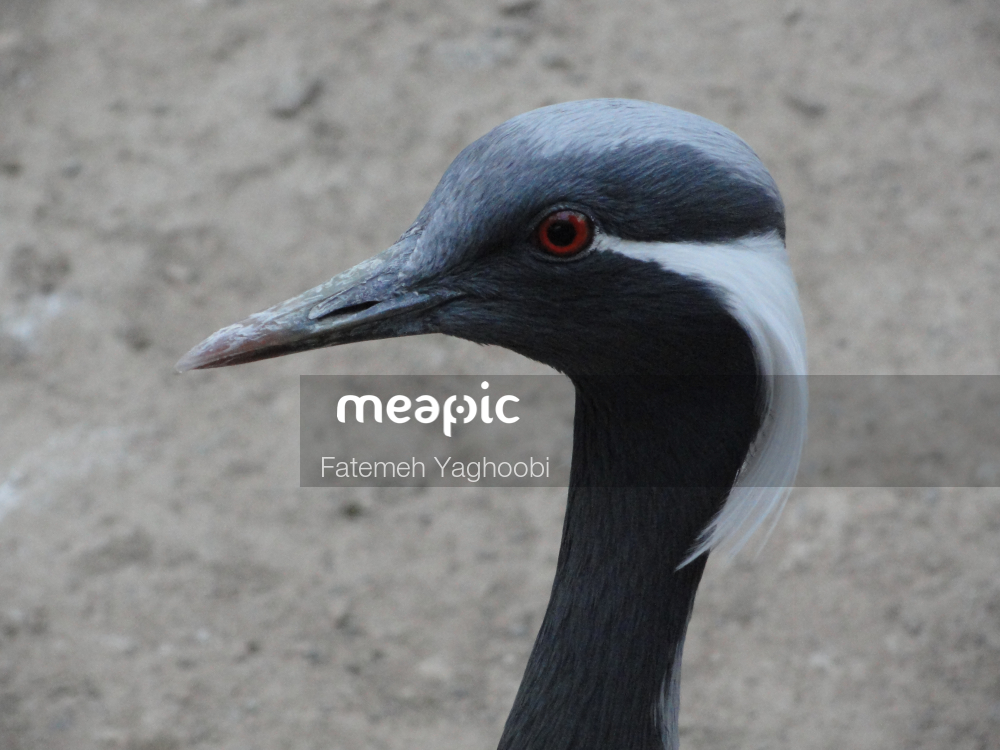Close Up Of A Bird Stock Photo · Meapic