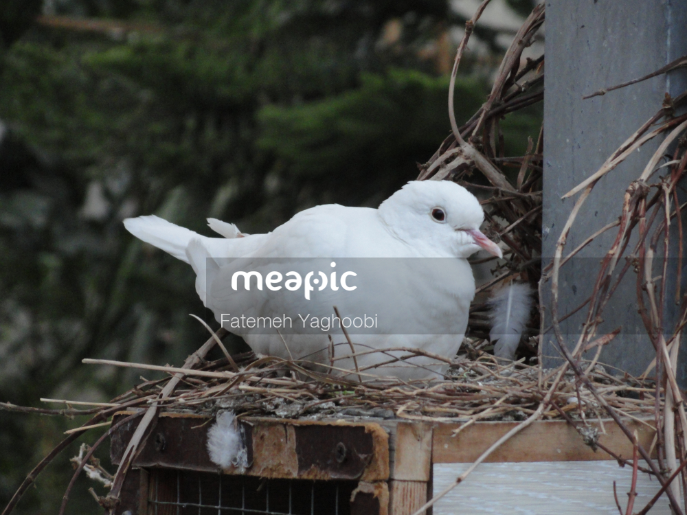 Small White Bird Sitting On Grass Stock Photo · Meapic