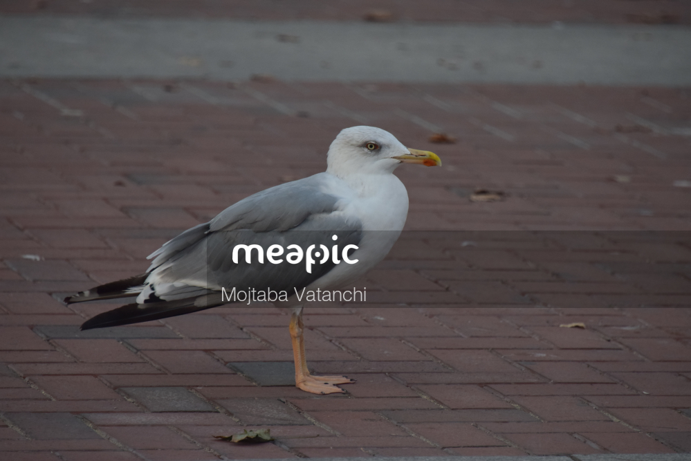 Bird Standing On A Beach Stock Photo · Meapic